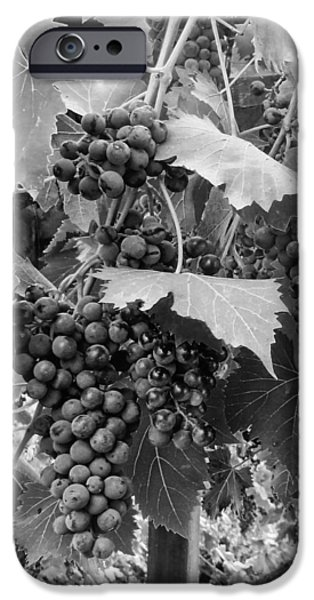 Crops iPhone Cases - Black or White Grapes iPhone Case by Dorothy Berry-Lound