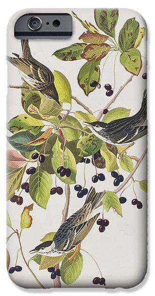 Black Berries iPhone Cases - Black Poll Warbler iPhone Case by John James Audubon