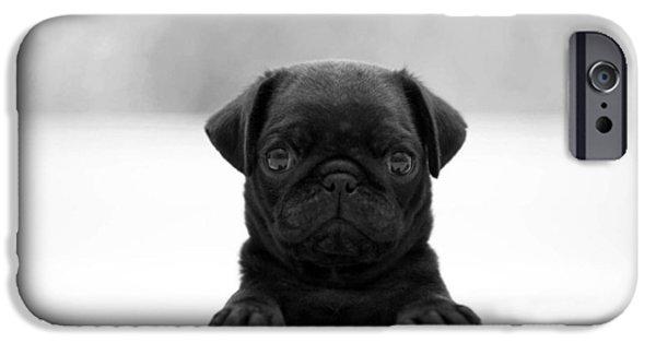Black Dog iPhone Cases - Black pug iPhone Case by Sumit Mehndiratta