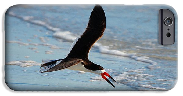 Razorbill iPhone Cases - Black Skimmer iPhone Case by Barbara Bowen