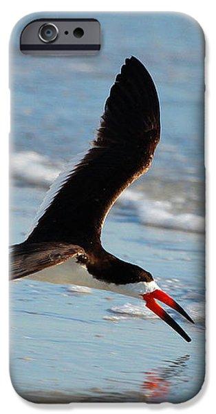 Black Skimmer iPhone Case by Barbara Bowen