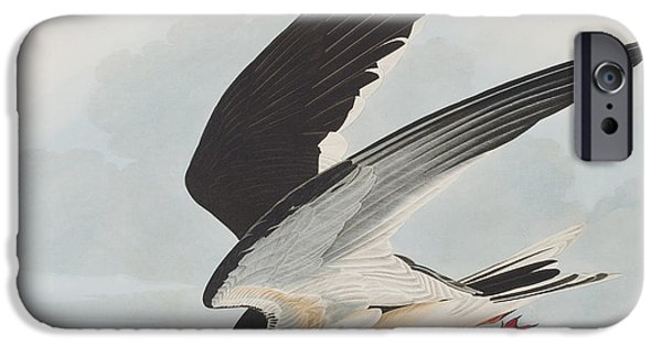 Sea Birds Drawings iPhone Cases - Black Skimmer or Shearwater iPhone Case by John James Audubon