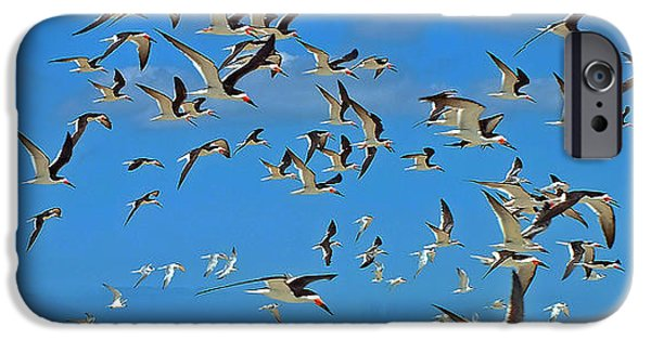 Sea Birds iPhone Cases - Black Skimmers iPhone Case by William Walker