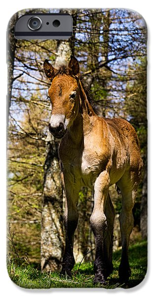 Fauna iPhone Cases - Black Socked Colt iPhone Case by Weston Westmoreland