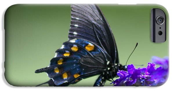 Fauna iPhone Cases - Black Swallowtail iPhone Case by David Cutts