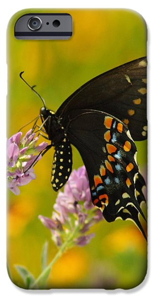 Black Swallowtail iPhone Case by Robert Frederick