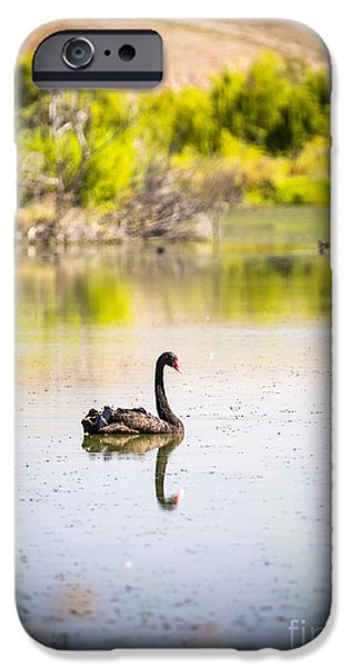 Swans... iPhone Cases - Black Swan iPhone Case by Tim Hester
