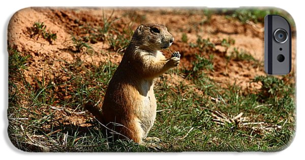 Dogs iPhone Cases - Black-tailed Prairie Dog iPhone Case by Christiane Schulze Art And Photography