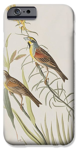 Feather Drawings iPhone Cases - Black-Throated Bunting iPhone Case by John James Audubon