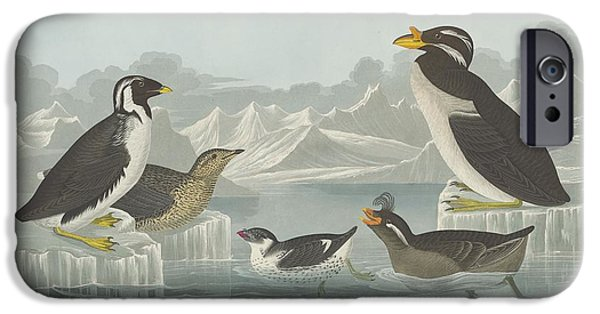 Seagull Drawings iPhone Cases - Black-Throated Guillemot and Nobbed-Billed Auk and Curled-Crested Auk and Horned-Billed Guillemot iPhone Case by John James Audubon