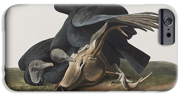 Crows Drawings iPhone Cases - Black Vulture or Carrion Crow iPhone Case by John James Audubon