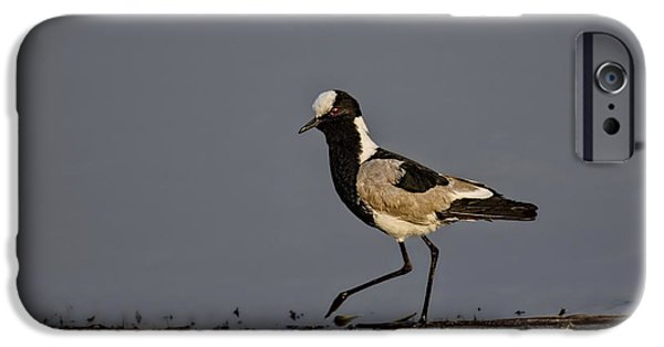 Lapwing iPhone Cases - Black-Winged Lapwing iPhone Case by Kay Brewer