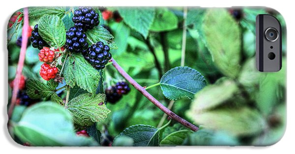 Black Berries iPhone Cases - Blackberry  iPhone Case by JC Findley