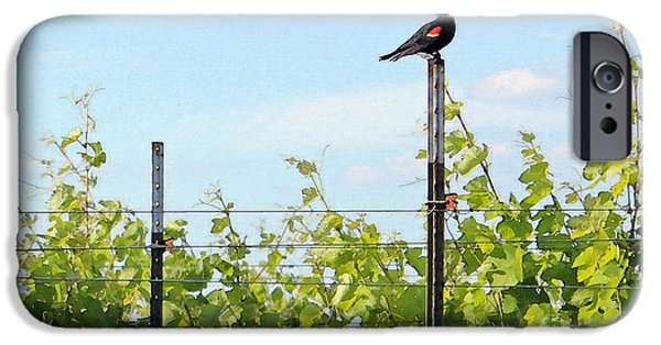 Grapevine Red Leaf iPhone Cases - Blackbird Has Spoken iPhone Case by Joe Jake Pratt
