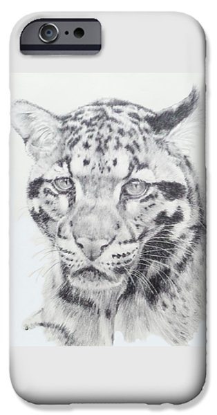 Animal Drawings iPhone Cases - Blatant iPhone Case by Barbara Keith