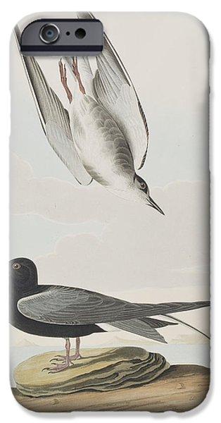 Tern iPhone Cases - Blck Tern iPhone Case by John James Audubon