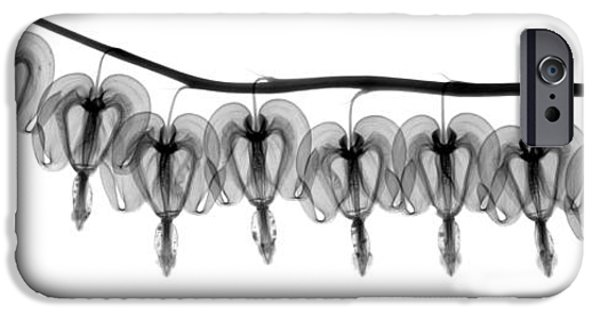 Botanical Photographs iPhone Cases - Bleeding Heart Flowers X-ray iPhone Case by Ted Kinsman