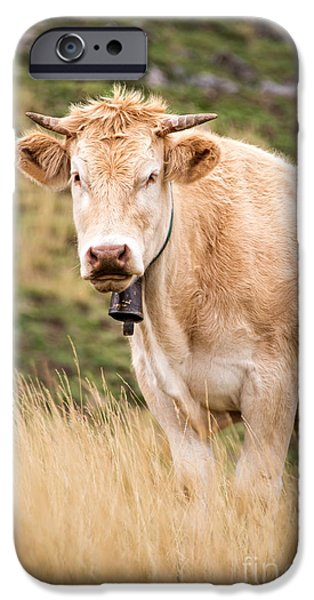 Meadow Photographs iPhone Cases - Blond cow iPhone Case by Delphimages Photo Creations