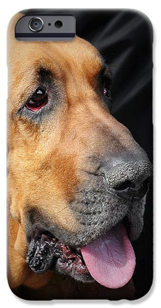 Bloodhound - Governed by a world of scents iPhone Case by Christine Till