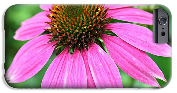Garden Ceramics iPhone Cases - Blooming Coneflower iPhone Case by Linda Eversole