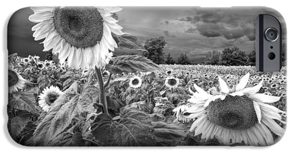 Flora iPhone Cases - Blooming Sunflowers in Black and White iPhone Case by Randall Nyhof