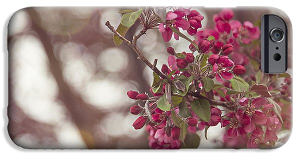 Lumiere iPhone Cases - Blossom Out iPhone Case by Audrey Wilkie