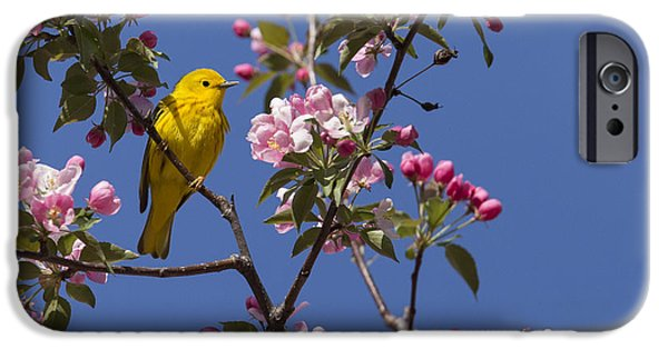 Warbler iPhone Cases - Blossoms and warbler iPhone Case by Mircea Costina Photography