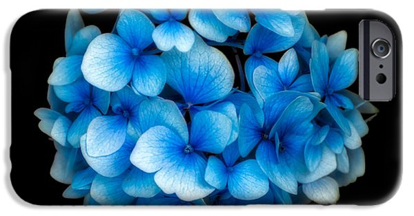 Flora Digital iPhone Cases - Blue iPhone Case by Adrian Evans