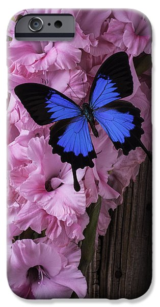 Gladioli iPhone Cases - Blue Butterfly On Glads iPhone Case by Garry Gay