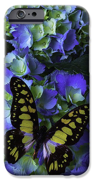 Insects Photographs iPhone Cases - Blue Butterfly On Hydrangea iPhone Case by Garry Gay