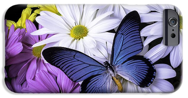 Insects Photographs iPhone Cases - Blue Butterfly On Mixed Mums iPhone Case by Garry Gay