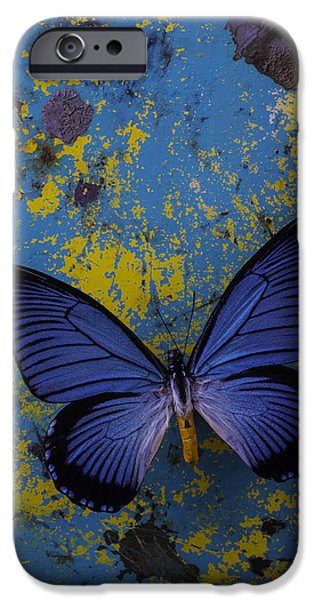 Insects Photographs iPhone Cases - Blue Butterfly On Rusty Wall iPhone Case by Garry Gay