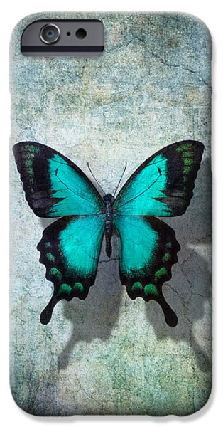 Insects Photographs iPhone Cases - Blue Butterfly Resting iPhone Case by Garry Gay