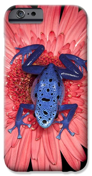 Poison iPhone Cases - Blue Dart iPhone Case by Janet Fikar