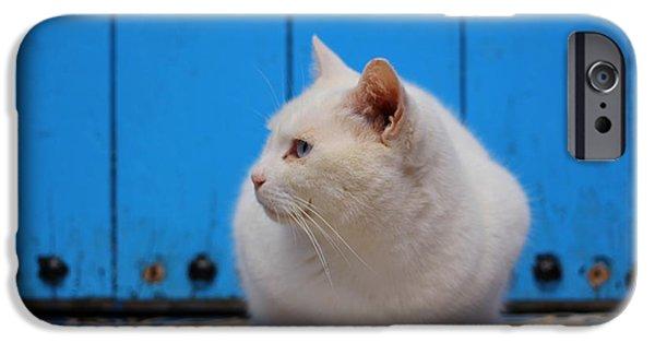 Rabat Photographs iPhone Cases - Blue Door White Cat iPhone Case by Ramona Johnston
