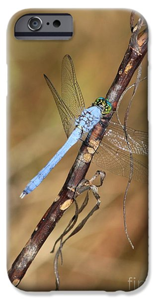 Blue Dragonfly Portrait iPhone Case by Carol Groenen