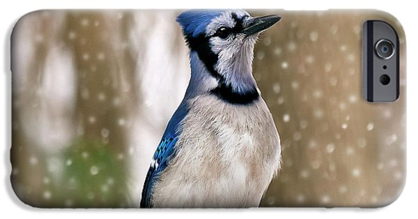 Bluejay iPhone Cases - Blue For You iPhone Case by Evelina Kremsdorf