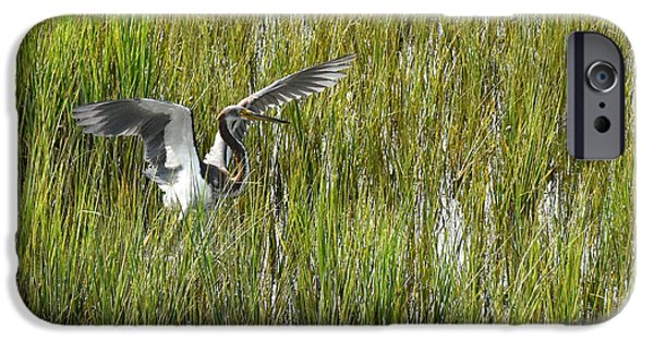Nature Center Pond iPhone Cases - Blue Heron Taking Flight in Charleston iPhone Case by Joan Kaplan