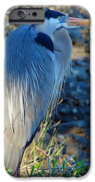 Birds iPhone Cases - Blue Heron Visions iPhone Case by Nada Frazier