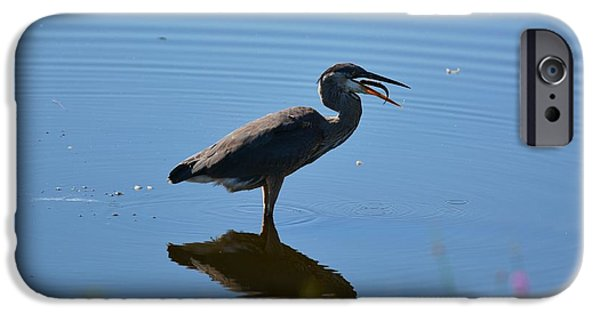 Animals Photographs iPhone Cases - Blue heron with a fish iPhone Case by Jo-Ann  Matthews