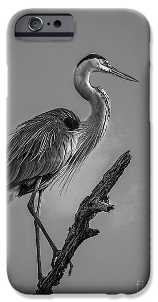 Sea Birds Photographs iPhone Cases - Blue In Black-BW iPhone Case by Marvin Spates