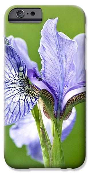 Blue Iris Germanica iPhone Case by Frank Tschakert