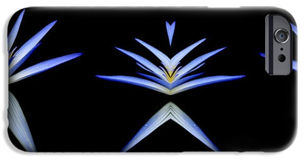 Nymphaea iPhone Cases - Blue Lotus Transitions 1-2-3 iPhone Case by Wayne Sherriff