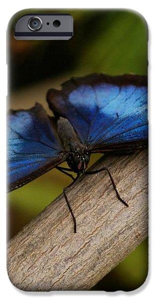 Blue Morpho Butterfly iPhone Case by Sandy Keeton