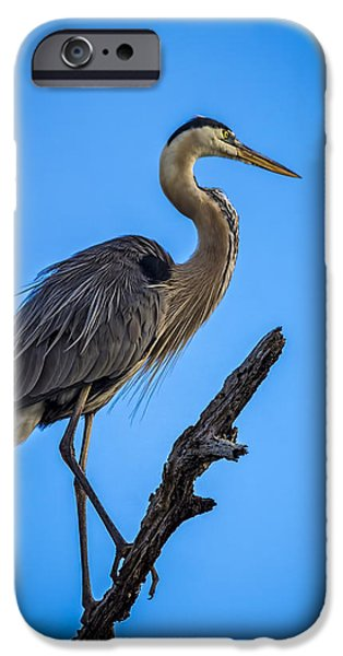 Sea Birds Photographs iPhone Cases - Blue on Blue iPhone Case by Marvin Spates