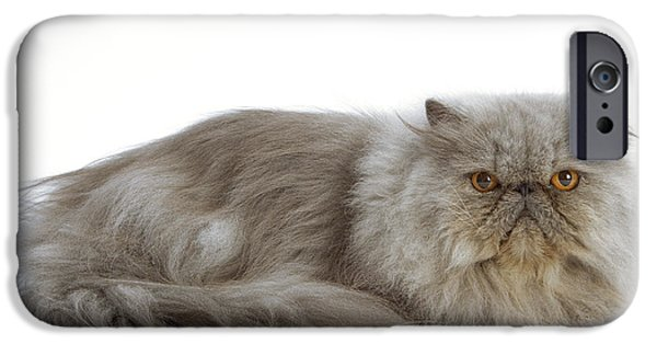 Gray Hair iPhone Cases - Blue Persian Cat iPhone Case by Jean-Michel Labat