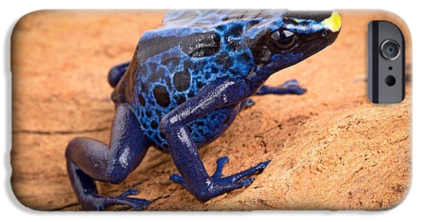 Frogs Photographs iPhone Cases - Blue Poison Arrow Frog iPhone Case by Dirk Ercken