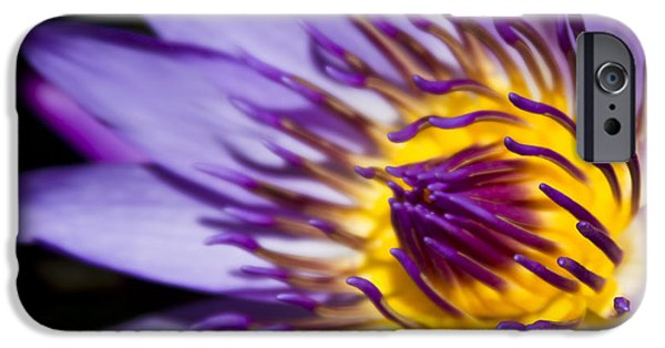 Poetic iPhone Cases - Blue Star Water Lily iPhone Case by Sharon Mau