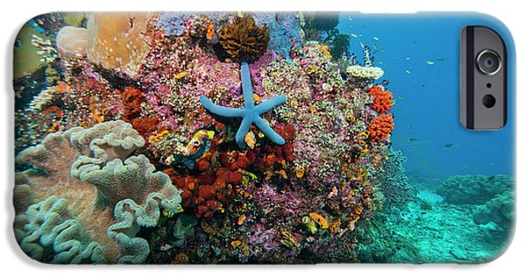 Undersea Photography iPhone Cases - Blue Starfish On Coral Reef, Raja iPhone Case by Beverly Factor