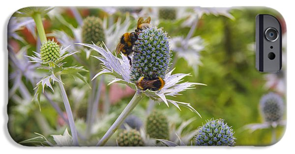 Autumn iPhone Cases - Blue thistles iPhone Case by Patricia Hofmeester
